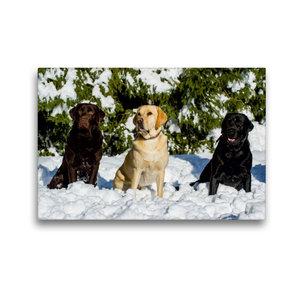 Premium Textil-Leinwand 45 cm x 30 cm quer Labrador Retriever -