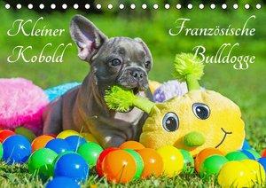 Kleiner Kobold Französische Bulldogge