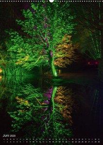 Waldlichter im Wildwald Vosswinkel 2020