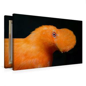 Premium Textil-Leinwand 75 cm x 50 cm quer Cayenne-Klippenvogel