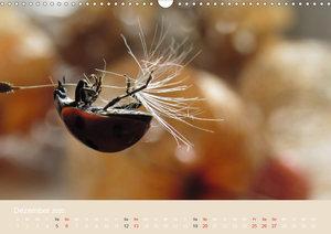 Kleine Glückskäfer