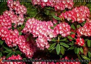 Rhododendren in der Parklandschaft Ammerland (Wandkalender 2019