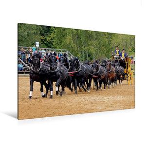 Premium Textil-Leinwand 120 cm x 80 cm quer Moritzburger Hengstp