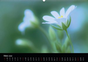 Wilde Blüten-Träume