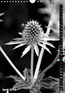 Blumige Graustufen - Schwarz und Weiß (Wandkalender 2019 DIN A4
