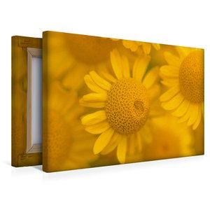 Premium Textil-Leinwand 45 cm x 30 cm quer Gelbe Mageriten