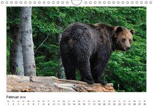Braunbären in Alaska (Wandkalender 2018 DIN A4 quer)