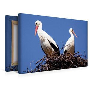Premium Textil-Leinwand 45 cm x 30 cm quer Storchenpaar in Allen