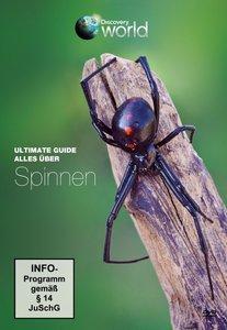 Alles über Spinnen