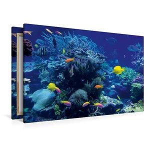 Premium Textil-Leinwand 120 cm x 80 cm quer Korallenriff