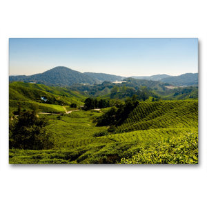Premium Textil-Leinwand 90 cm x 60 cm quer Teeplantage