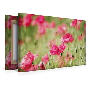 Premium Textil-Leinwand 45 cm x 30 cm quer Rosa Klatschmohn Trau