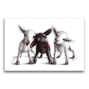 Premium Textil-Leinwand 75 cm x 50 cm quer Drei freche Schafe