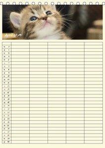 Zauberhafte Katzen - Familienplaner (Tischkalender 2019 DIN A5 h