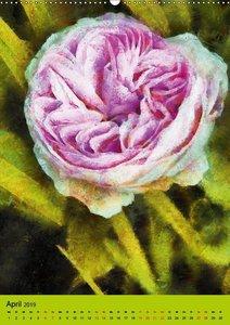 Malerische Rosen (Wandkalender 2019 DIN A2 hoch)