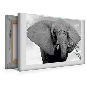 Premium Textil-Leinwand 45 cm x 30 cm quer Afrikanischer Elefant