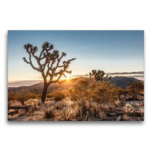 Premium Textil-Leinwand 75 cm x 50 cm quer Joshua Tree National