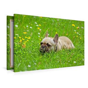 Premium Textil-Leinwand 120 cm x 80 cm quer Französische Bulldog