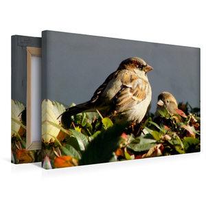 Premium Textil-Leinwand 45 cm x 30 cm quer Spatzen in der Herbst