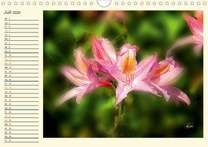 Rhododendren in der Parklandschaft Ammerland / Geburtstagskalend