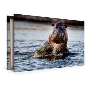 Premium Textil-Leinwand 120 cm x 80 cm quer Flusspferd