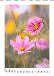 Rosa Blütenzauber