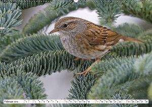 Heimische Gartenvögel (Wandkalender 2019 DIN A2 quer)