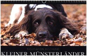 Faszination Jagdhund - Kleiner Münsterländer (Wandkalender 2017