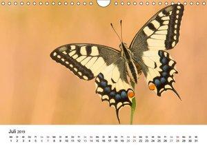 Wilde Tiere - Ganz nah (Wandkalender 2019 DIN A4 quer)