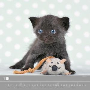 Verspielte Katzenbabys 2018 - Bildkalender