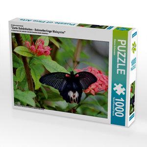 """Ein Motiv aus dem Kalender \""""Zarte Schönheiten - Schmetterlinge"""