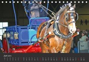 Stanzer, E: Shire Horse . Prunkvolle Giganten (Tischkalender