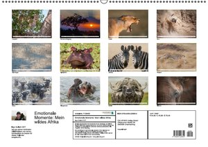 Emotionale Momente: Mein wildes Afrika (Wandkalender 2016 DIN A2