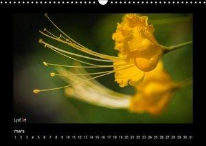 Fleurs et couleurs (Calendrier mural Calendrier perpétuel DIN A3