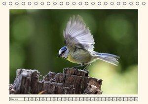 Pötsch, R: Gefiederte Schönheiten - Die Blaumeise (Tischkale