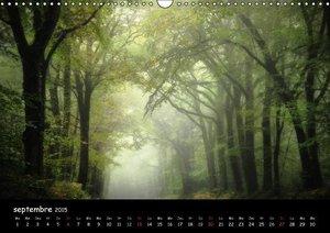 BROCELIANDE, la forêt (Calendrier mural 2015 DIN A3 horizontal)