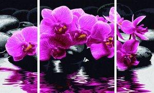 Schipper Malen nach Zahlen - Orchideen (Triptychon)