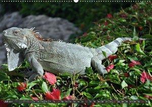 Wilde Fauna - Reptilien