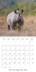 Emotional Moments: Africa\'s Big Five. (Wall Calendar 2015 300 ×