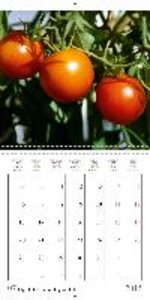 Tasty tomatoes - from sunshine yellow to purple (Wall Calendar 2