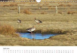 Impressionen der Nordseeinsel Amrum (Wandkalender 2016 DIN A4 qu