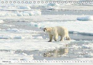 Springer, H: Eisbären - Könige der Arktis (Tischkalender 201