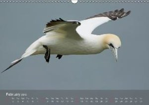 Northern Gannets (UK-Version) (Wall Calendar 2015 DIN A3 Landsca