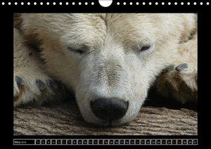 Die Schönheit der Tiere (Wandkalender 2016 DIN A4 quer)