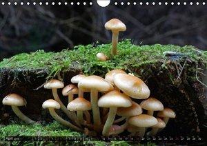 Mushroom Season (Wall Calendar 2015 DIN A4 Landscape)