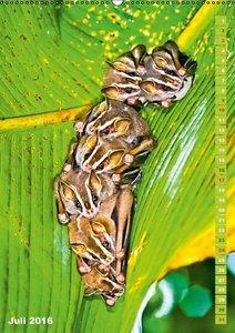 Fledermäuse und Flughunde: Tierische Drachenflieger (Wandkalende
