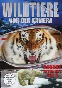 Wildtiere Vor Der Kamera
