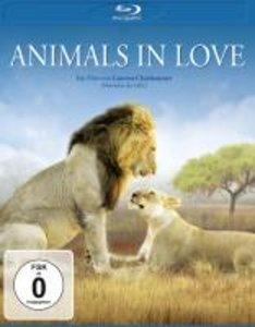 Animals in Love BD