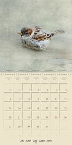 Feathered companions (Wall Calendar 2015 300 × 300 mm Square)