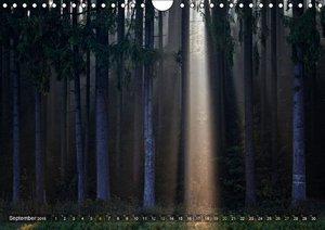 Cross, M: Bäume (Wandkalender 2015 DIN A4 quer)